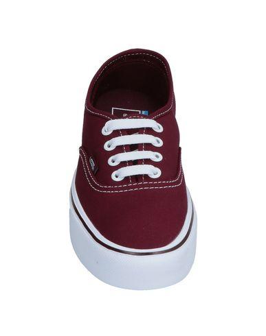 Vans Bordeaux Vans Sneakers Sneakers 5FTq0xtw
